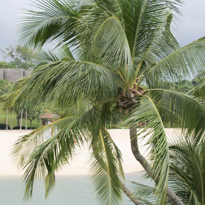 Pulawan Beach